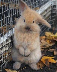 Coelhinho da Páscoa Que trazes pra mim?  Um ovo, dois ovos, três ovos assim   Coelhinho da Páscoa Que cor eles têm?  Azul, amarelo, vermelho também