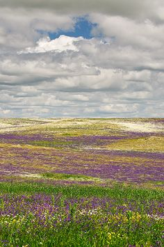 Lluvia de colores en la estepa en Llanos de Brozas. Las estepas y herbazales en plena primavera. Extremadura Spain