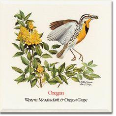 Western Meadowlark & Oregon Grape (Oregon's State Bird and Flower)
