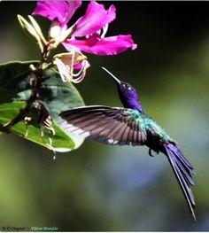 Beautiful little hummingbird