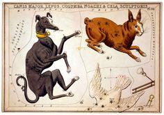 Constellations Print Canis Major, Lepus, Noachi & Sculptoris Dog Rabbit Astronomy by Imprimere Graphics