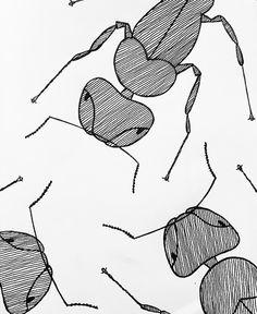 Ants illustration by CerenErman