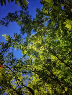 Puun latvoja