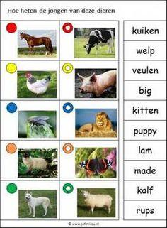Deze knijpkaart en nog veel meer in de categorie woordenschat kun je downloaden op de website van Juf Milou. Preschool, Kitten, Mini, Dogs, Image, Website, Animals, Cute Kittens, Kitty