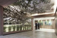 A leafy tree #image marks the new entrance to the traumatology department at Mãe de Deus Hospital. Photo: Marcelo Donadussi