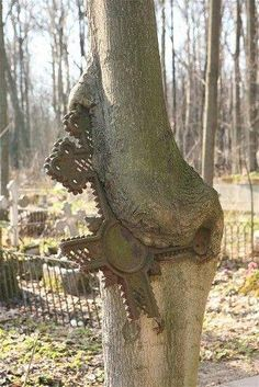 A weathered-cross grave marker has broken and fused with a tree. Smolensk cemetery of St. Petersburg, Russia<<---but imagine all the magical ghost powers this tree could have! Cemetery Statues, Cemetery Headstones, Old Cemeteries, Cemetery Art, Graveyards, Monuments, Recoleta Cemetery, La Danse Macabre, Weird Trees
