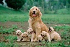 Mother dog sitting with her puppies  .. Click the pic for more awww
