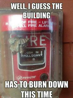 Fire lol