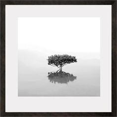 You need this Will Salter Photography Mangrove | Limited Edition Fine Art Photograph