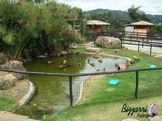 Ideas Estanque, Garden Pond Design, Duck Pond, Landscape Plans, Outdoor Living, Outdoor Decor, Hobby Farms, Farm Gardens, Garden Planning