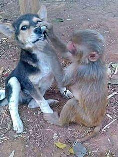 На приеме у обезьянки #стоматология #dentistry