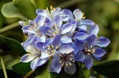 รวมดอกไม้ในไทย - Postjung.com