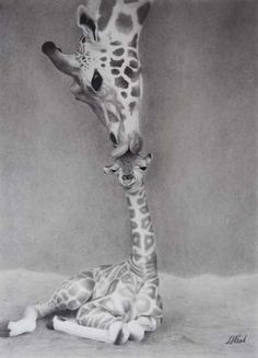 i LOVE giraffes!!!!