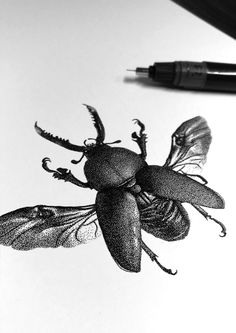 21 x 21 cm Black Rotring Ink - Dots mm - Schoellershammer white paper, 200 gr. Stippling Drawing, Drawing Base, Engraving Illustration, Graphic Illustration, Beetle Tattoo, Insect Tattoo, Aesthetic Tattoo, Tinta China, Insect Art