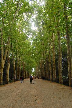 walk up to Chateau de Chenonceau, Loire Valley