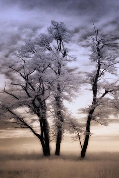 Lone Trees - Blue Ridge Parkway, North Carolina