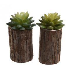 S_6 PLANT IN WOODEN TRUNK 2 DESIGNS 9X9X16