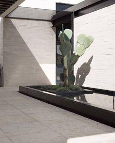 Seven Useful Shade Tolerant Groundcovers For Tough Spots De Polen Diseo Vivo Indoor Cactus, Indoor Flowers, Indoor Planters, Modern Landscaping, Outdoor Landscaping, Outdoor Gardens, Landscape Architecture, Landscape Design, Garden Design