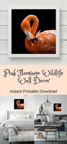 Flamingo Photograph Wall Art, Wildlife Decor, Pink Flamingo Decor, Southern Bird, Outdoor Wildlife Nature Photo, Instant Download Printable