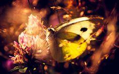 butterfly themed wallpaper for desktops, 574 kB - Era Hardman
