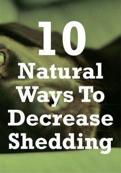 Have a heavy shedder? Learn the top 10 natural ways to cut down on shedding and save yourself cleaning time.