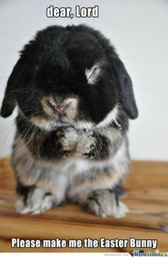 Google Image Result for http://us11.memecdn.com/Dear-Lord-Please-make-me-the-easter-bunny_o_138913.jpg