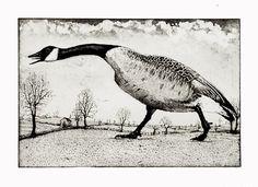 Hissing Goose etching & aquatint 20 x 30 cm by timsouthallart, £175.00