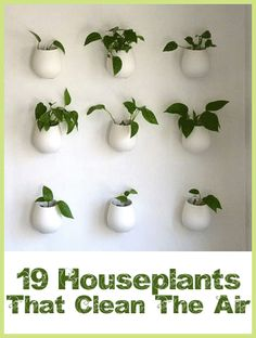 Types of Houseplants That Clean Indoor Air - Sustainable Baby Steps. Not sure whether to pin this on my gardening or house board. I'll splurge and put it on gardening :) Plantas Indoor, Types Of Houseplants, Hanging Flower Pots, Hanging Planters, Wall Mounted Planters Indoor, Ikea Planters, Hanging Gardens, Indoor Planters, Gerbera