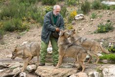 44 Europe Spain Ideas In 2021 Spain Europe Wolf Population