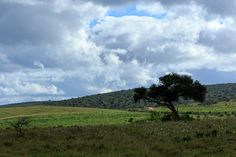 Green grass in the Addo Elephant National Park Green grass in the Addo Elephant National Park on a cloudy day.