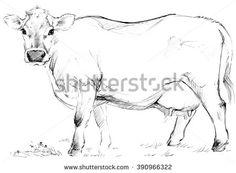 Cow. Cow sketch. Dairy cow pencil sketch. Animal farm