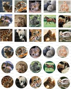 Animal Mothers Digital Collage 1 inch / 118 by LisaChristines, $1.50