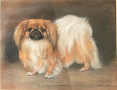 1915 A Pekingese, oil pastel by Marion Harvey