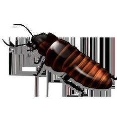 Kill roaches in your walls