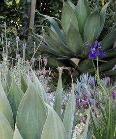 Naomi Sanders garden planting of succulents and lavender l Gardenista
