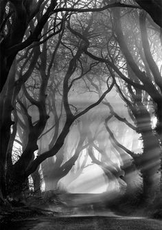 The Dark Hedges- Northern Ireland