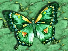 Abstract Green Butterfly - Desktop Nexus Wallpapers