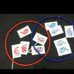 "Venn diagram activity I did with kindergarten with the book ""one fish two fish red fish blue fish"""