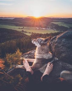 Honza Řeháček is freelance photographer from Czechia with a passion for nature, travel and his wolfdog Sitka. He can often be found combining his 3 passions, Animals And Pets, Funny Animals, Cute Animals, Baby Huskys, Animal Photography, Nature Photography, Boy Dog, Golden Retriever, Photos Voyages