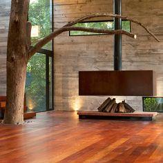 Tree + house + aerial rig = dream come true