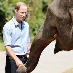 The Duke of Cambridge will deliver a speech on Chinese television on the urgent work needed to combat the illegal wildlife trade. The Duke's speech will be filmed in London in mid-October before being aired on CCTV1  the station with the largest audience in China  as part of a series of programmes called Let's Talk.  The Duke is grateful to have this opportunity to explain how people around the world must work together to save some of the planet's most critically endangered species before…