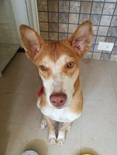 Husky, The #dog with the Swag