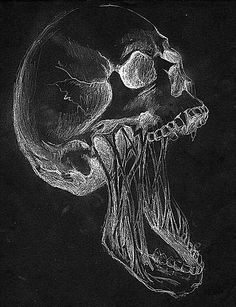Black and white skull, stretched jaw