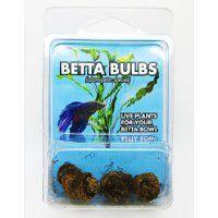 Betta Bulbs - Live Plants for your Betta Bowl - 3 Bulbs - Aponogeton Species Betta Fish Tank Mates, Betta Fish Toys, Betta Fish Care, Betta Tank, Live Aquarium Plants, Planted Aquarium, Aquarium Fish, Live Plants, Aquarium Ideas