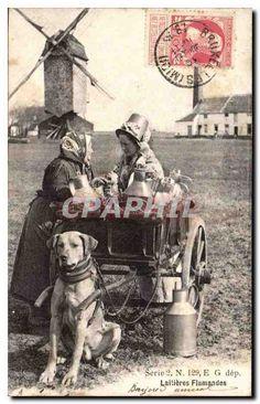 Belgique Belgie Laitieres flamandes CPA Voiture a chien TOP (moulin mill)