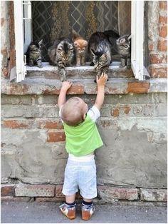 Niño Saludando a los Gatos.