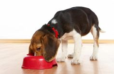 Try two recipes for quick meals and biscuits your dog will love! - Capper's Farmer Magazine