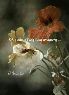 Greek Quotes, Picture Quotes, Good Morning, Motivational Quotes, Letters, Inspirational, Pictures, Painting, Art