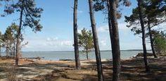 La plage, la forêt et bien d'autres choses à découvrir sur l'île Lumineuse..... Ile d'Oléron. Hôtel le nautile. www.hotel-lenautile.fr