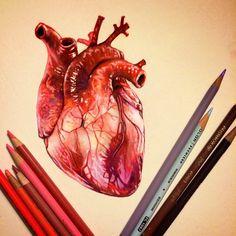 Восхитительный гиперреализм цветными карандашами от Морган Дэвидсон
